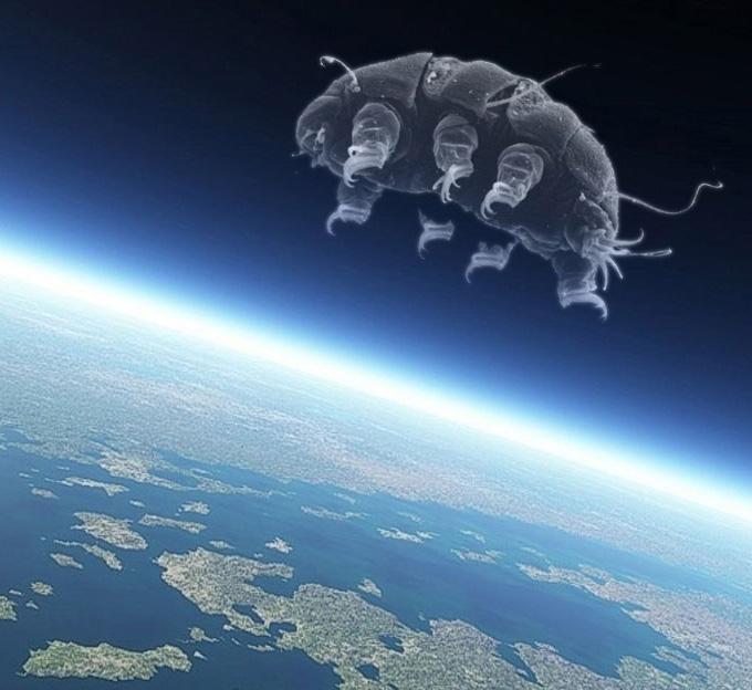 tardigrade space